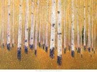 A Portrait Of Aspens Fine Art Print
