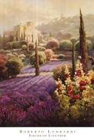 Fields of Lavender Fine Art Print