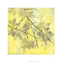 Fluttering Maple I Fine Art Print