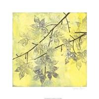 Fluttering Maple II Fine Art Print