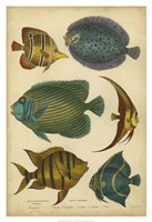 "Non-Emb. Goldsmith's Spinous Fishes by Trace Goldsmith - 26"" x 38"", FulcrumGallery.com brand"