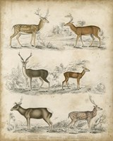 Non-Embellished Species of Deer - various sizes