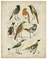 Non-Embellished Avian Gathering I Fine Art Print