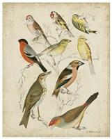 Non-Embellished Avian Gathering II Fine Art Print