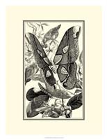 B&W Butterfly II Fine Art Print