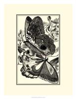 B&W Butterfly IV Fine Art Print