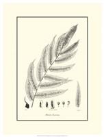 B&W Fern III Fine Art Print