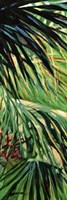 Just Fronds Fine Art Print