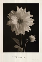 """Dahlia Bud by Sondra Wampler - 26"""" x 38"""""""