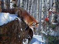 Fox in Winter Fine Art Print