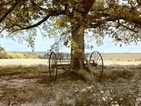 "24"" x 18"" Oak Trees"