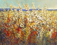 Field of Spring Flowers II by Timothy O'Toole - various sizes