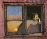 Kitten Window Fine Art Print