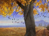 Yellow Cottonwood Fine Art Print
