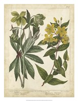 "Non-Embellish Enchanted Garden III by Sydenham Edwards - 20"" x 26"", FulcrumGallery.com brand"