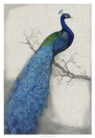 "Peacock Blue I by Timothy O'Toole - 26"" x 38"", FulcrumGallery.com brand"