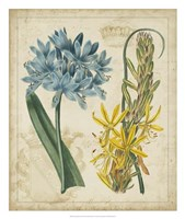"Botanical Repertoire II by Vision Studio - 22"" x 26"""