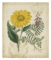 "Botanical Repertoire III by Vision Studio - 22"" x 26"""