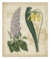 "Botanical Repertoire IV by Vision Studio - 22"" x 26"""