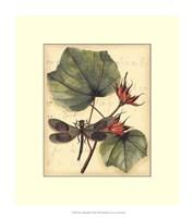 "Petite Dragonflies I by Vision Studio - 12"" x 14"""