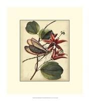 "Petite Dragonflies III by Vision Studio - 12"" x 14"""