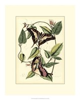 """Petite Butterflies II by Vision Studio - 15"""" x 19"""""""