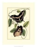 "Petite Butterflies III by Vision Studio - 15"" x 19"""