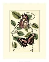 "Petite Butterflies IV by Vision Studio - 15"" x 19"""
