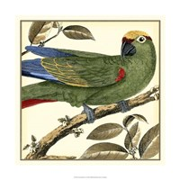 "Tropical Parrot I by Martinet - 18"" x 18"""
