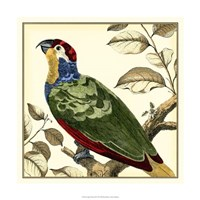 "Tropical Parrot II by Martinet - 18"" x 18"""