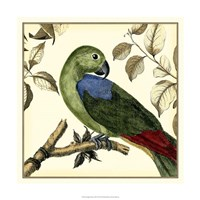 "Tropical Parrot III by Martinet - 18"" x 18"""