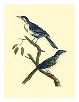 Vintage Bird Pair II Fine Art Print