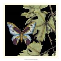 """Butterfly on Vine I by Jennifer Goldberger - 18"""" x 18"""""""