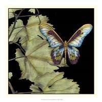 """Butterfly on Vine II by Jennifer Goldberger - 18"""" x 18"""""""