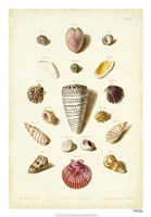 Shells, Tab. III Fine Art Print