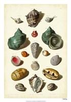 Shells, Tab. V Fine Art Print