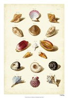 Shells, Tab. VI Fine Art Print
