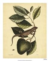 Iguana, Pl. T64 Fine Art Print
