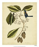 The Finch Creeper, Pl. T64 Fine Art Print