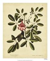Bahama Sparrow, Pl. T37 Fine Art Print