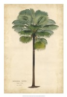 Palm of the Tropics II Fine Art Print