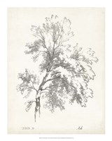 "Ash Tree Study - 16"" x 20"""