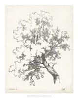"""Oak Tree Study - 16"""" x 20"""""""