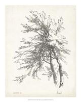 "Beech Tree Study - 16"" x 20"""