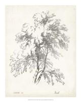 """Birch Tree Study - 16"""" x 20"""""""
