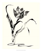 """Studies in Ink - Tulip by Nan Rae - 18"""" x 22"""""""