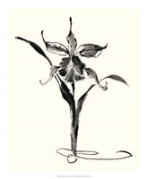 """Studies in Ink - Cattleya by Nan Rae - 18"""" x 22"""""""