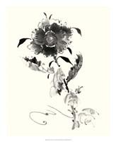 "Studies in Ink - Rose I by Nan Rae - 18"" x 22"""