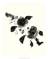 Studies in Ink - Camellia Fine Art Print