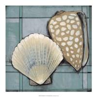 "Seashell Sketch I by Timothy O'Toole - 18"" x 18"""